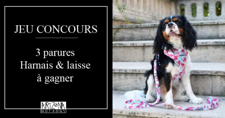 concours gagnez une magnifique parure harnais et laisse arizona hotdogs contest 5d2343a088041