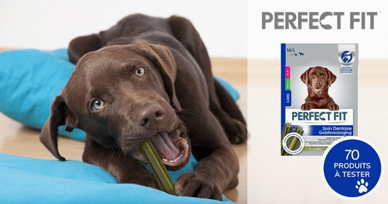 test produit chien 1