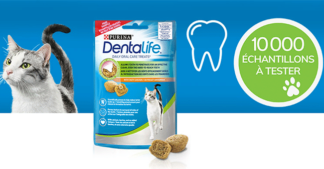 concours purina