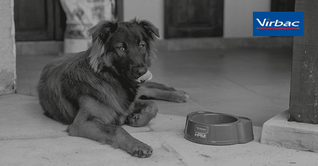 concours alimentation chien chat