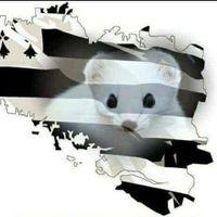Illustration du profil de crissiette