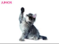 DVD gratuit de conseils d'alimentation pour votre chat