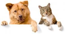 200 box pour chien et chat offertes