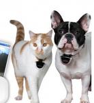 Remportez 3 caméras Eyenimal pour chien et chat!