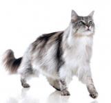 3 semaines de croquettes Purina pour votre chat!