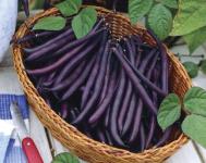 Haricot violet sans fil Velour à tester gratuitement !