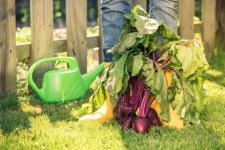 Cet insecticide au savon noir sera parfait pour votre jardin bio