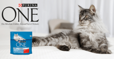 2500 packs d'alimentation pour chat Purina à tester