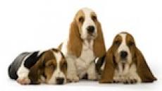Echantillons de produits Hill's pour chiens et chats